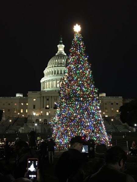 Capitol Christmas Tree 2017